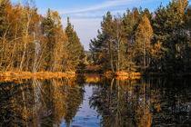 Herbst im Schwenninger Moos by Christine Horn