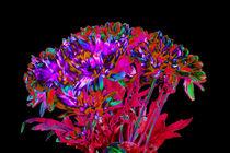 Abstract Flowers von David Toase