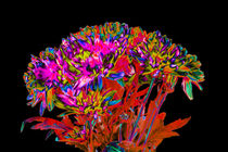 Abstract Flowers by David Toase