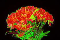 Abstract Flowers von David Toase
