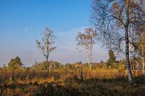 Bäume im Schwenninger Moos - Villingen-Schwenningen by Christine Horn