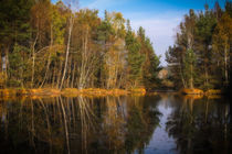 Herbstlicher Birken- und Fichtenwald im Schwenninger Moos - Villingen-Schwenningen von Christine Horn