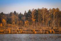 Naturschutzgebiet Schwenninger Moos - Villingen-Schwenningen by Christine Horn
