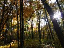 Herbstwald by yvi-mueller
