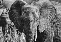 Elegant Elephant  by Lize van der Aar