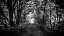 Birkenweg im Teufelsmoor von Jens Welsch