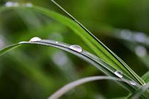 Regentropfen auf Grashalm by Marlise Gaudig