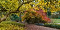 Herbst im Japangarten Karlsruhe von Stephan Gehrlein