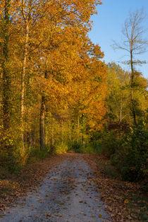 Waldweg im Herbst von Stephan Gehrlein