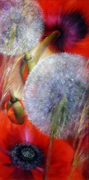 1605-mohn-und-pusteblumen
