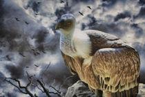 The Vulture von garrulus-glandarius