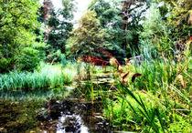 Tümpel im Wald von garrulus-glandarius