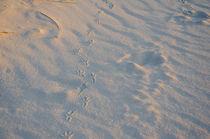 Footprints in the sand on a beach in Denmark by Tobias Steinicke