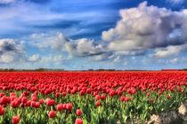 Tulpenfeld von garrulus-glandarius
