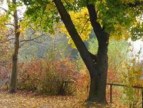 Steirischer Herbst zwei von Rudolf Strasser