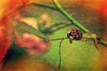 Harlekin  -  Ladybug von Claudia Evans