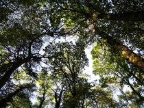 Baumkronen  von yvi-mueller