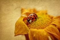 Ladybug on yellow flower by Claudia Evans