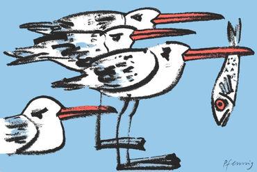 Moewen-seagulls-pfennig