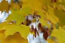 Herbstlaub-1 by maja-310