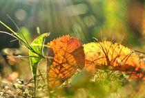 Herbst-Impression by Eberhard Schmidt-Dranske
