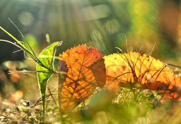 Herbst-impression-2
