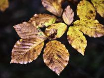 Goldene Herbstblätter by Christian Mueller