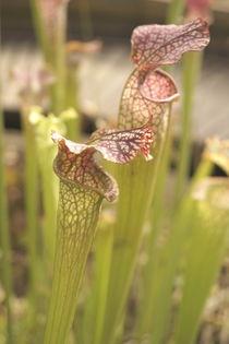Blüten auf Jagt von Benjamin Kranich