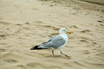 SEAGULL by Claudia Evans