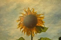 """SUNFLOWERS DREAM"" by Claudia Evans"