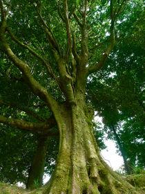 Grüner Baum by Christian Mueller