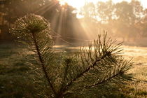 Herbstlicht II von Eike Holtzhauer