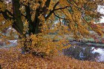 Herbststimmung am Niersufer by Frank  Kimpfel