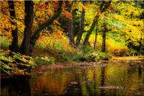 Herbst Bach von Sandra  Vollmann