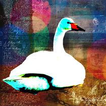 Swan. by kristinn-orn