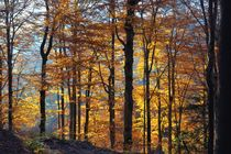 Golden november von fostern
