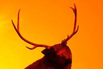 No hunting for pleasure  by Enache Armand Iustinian