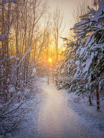 Winter wonderland by Nuno Borges