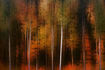 Herbstwaldrand von Bastian  Kienitz
