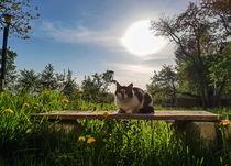 Good Morning Kitty by Enache Armand Iustinian