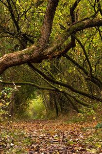 Idyllischer Waldweg by Björn Knauf