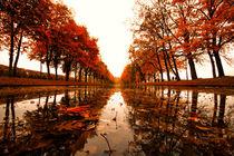 Der Herbst im Schweriner Schlossgarten.  von Stephan Darm