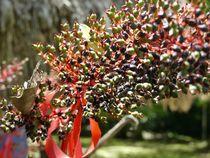 Tropical Details II by Annika  Leichtweiss