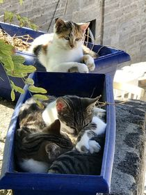 Katzen Gemeinschaft by Stefan Wehmeyer