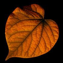 Herbstliches Blatt 2 von Hans Werner Partes