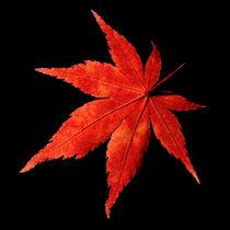 Herbstliches Blatt 1 von Hans Werner Partes