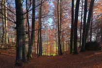 Herbstlicht von heiko13
