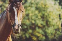 Feldmark und seine Pferde von Jacqueline Schreiber
