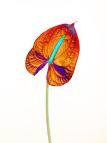 Abstract Anthurium-13 von David Toase