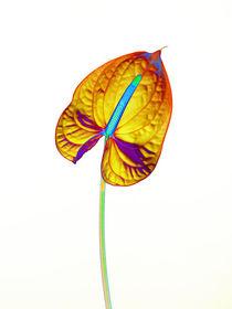 Abstract Anthurium-14 von David Toase